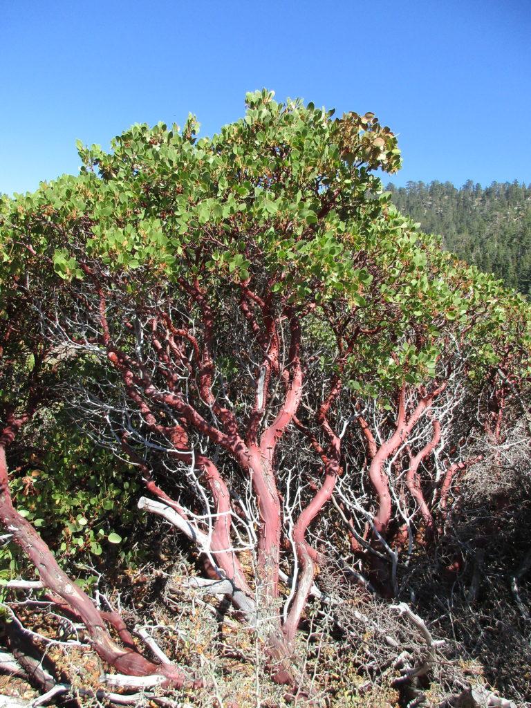 PCT, Sierra hiking, Laura Randall, Pacific Crest Trail guidebook