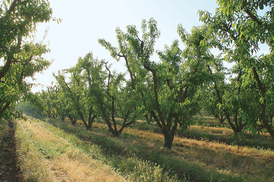 Visit California Farms, Erin Mahoney Harris, Full House Farm, California farm stays, Naylor's Organic Family Farm
