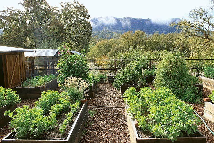 Visit California Farms, Erin Mahoney Harris, Full House Farm, California farm stays, Naylor's Organic Family Farm, Rancho Dos Amantes