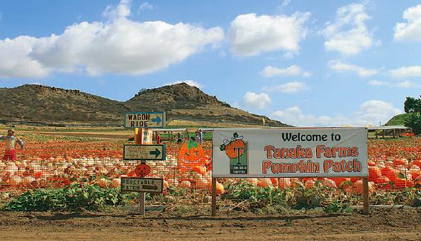 Visit California Farms, Erin Mahoney Harris, California farm tours, Underwood Family Farm