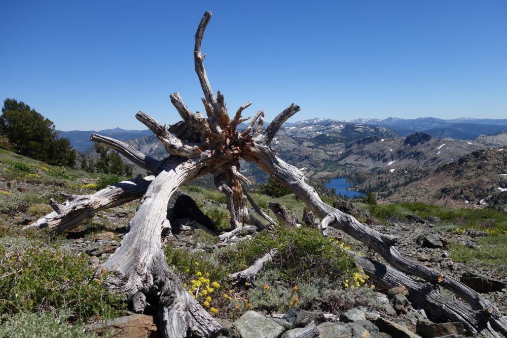 Pacific Crest Trail, Jordan Summers,