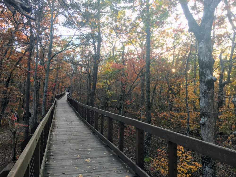 Alabama in the fall, why visit Alabama in the fall