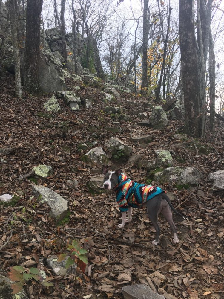 Adventure dog, how to hike with your dog