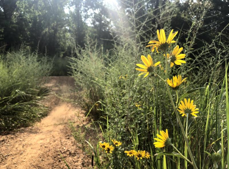 Wilderness Press, tips for summer heat