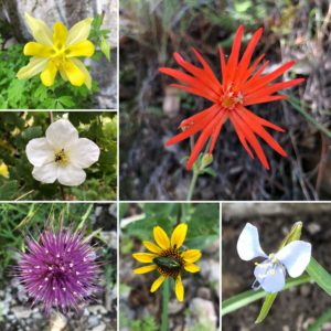 Arizona wildflowers, Arizona National Scenic Trail, Wilderness Press, Sirena Dufault