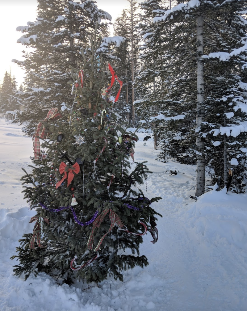 Leave No Trace, Christmas outdoors
