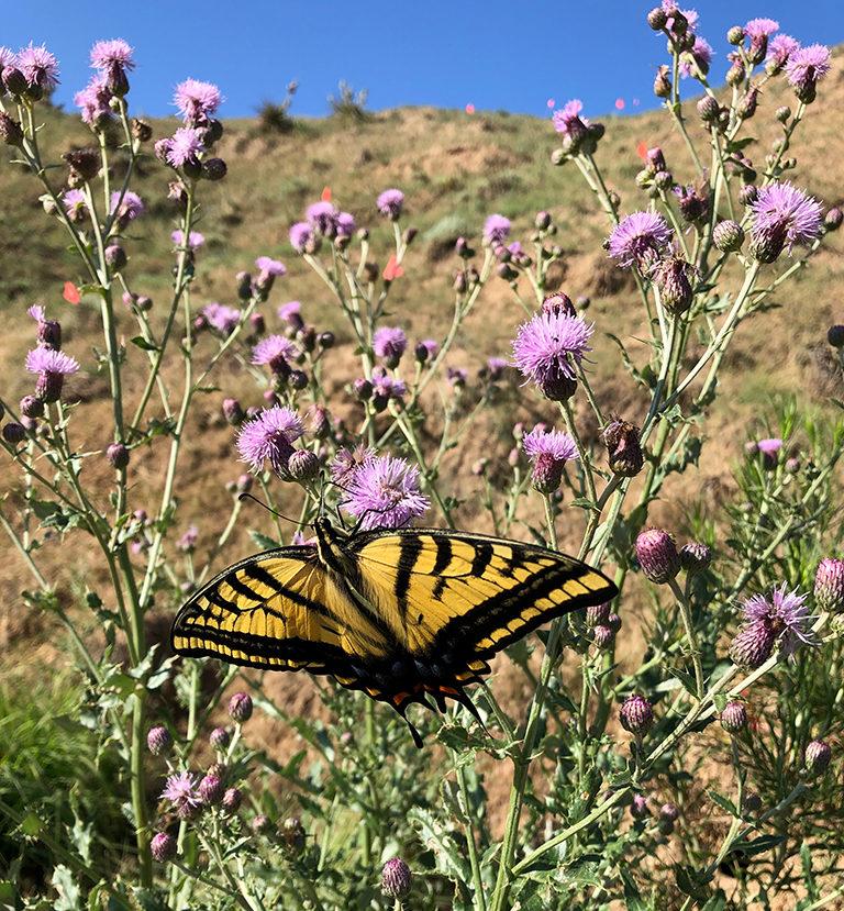 Beautiful butterfly amid wildflowers in Colorado